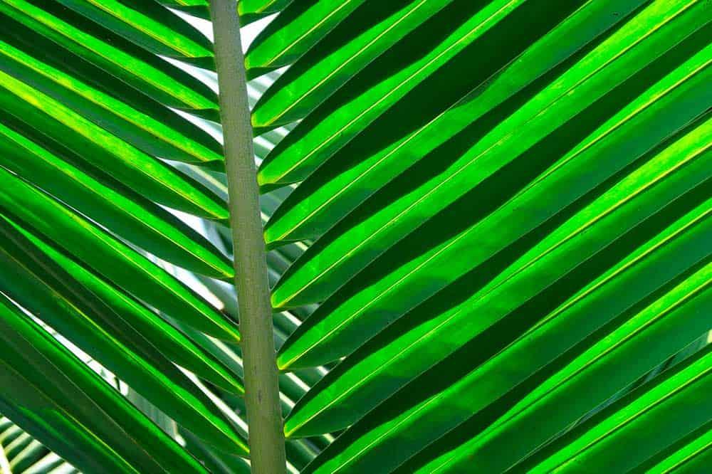 Vajillas ecológicas compostables y biodegradables de hoja de palma